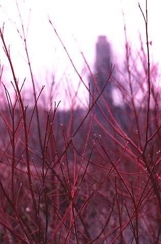 phiipps-gardens-twigs.jpg