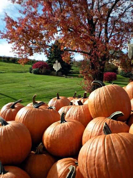 2009-10-22-Wexford-Pumpkins-01