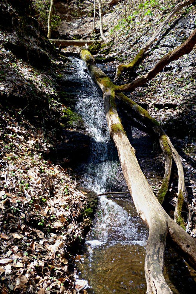 2013-04-21-Waterfall-Trillium-Trail-01
