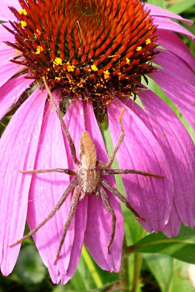2013-09-02-Fox-Chapel-spider-01