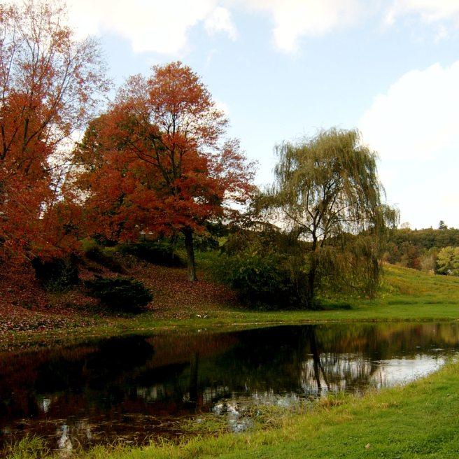 2013-10-18-Wexford-pond-02