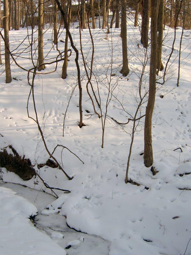 2014-02-14-Mount-Lebanon-snow-01