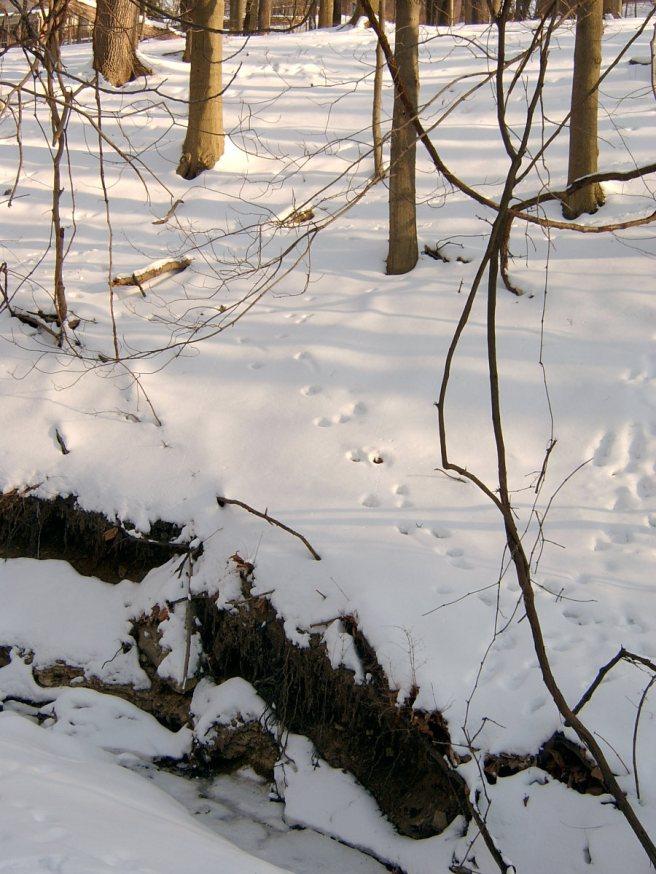 2014-02-14-Mount-Lebanon-snow-02