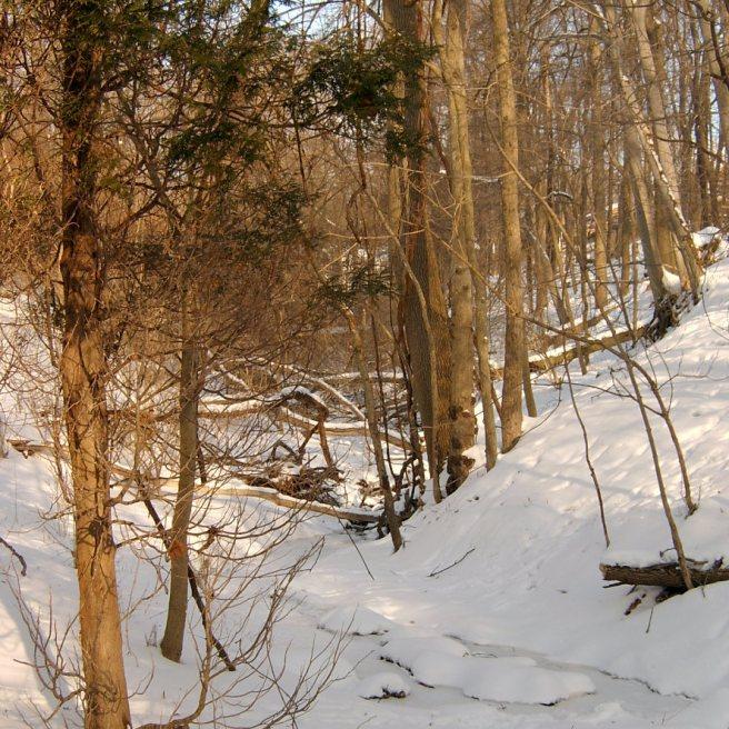 2014-02-14-Mount-Lebanon-snow-03