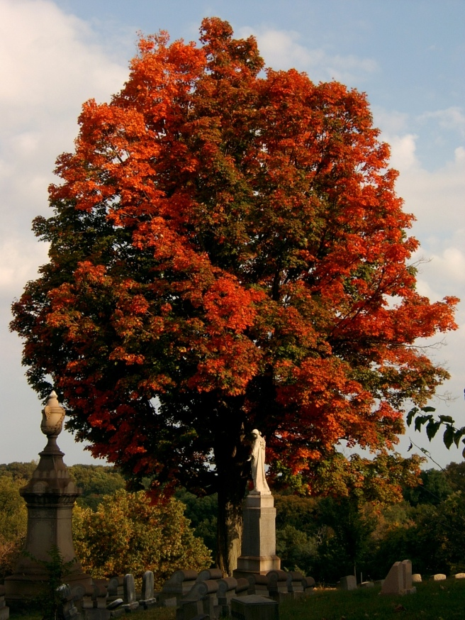 2014-09-30-Smithfield-Cemetery-Tree-03-smaller