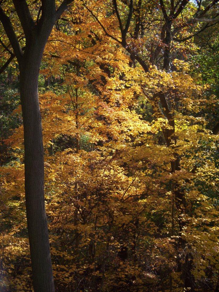 2014-10-27-Schenley-Park-leaves-02