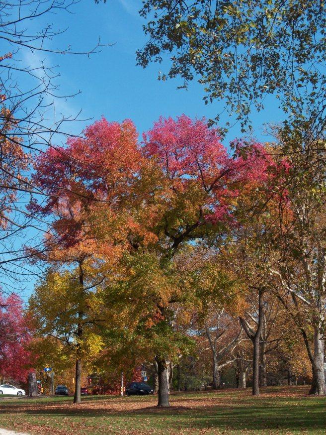 2014-10-27-Schenley-Park-leaves-03