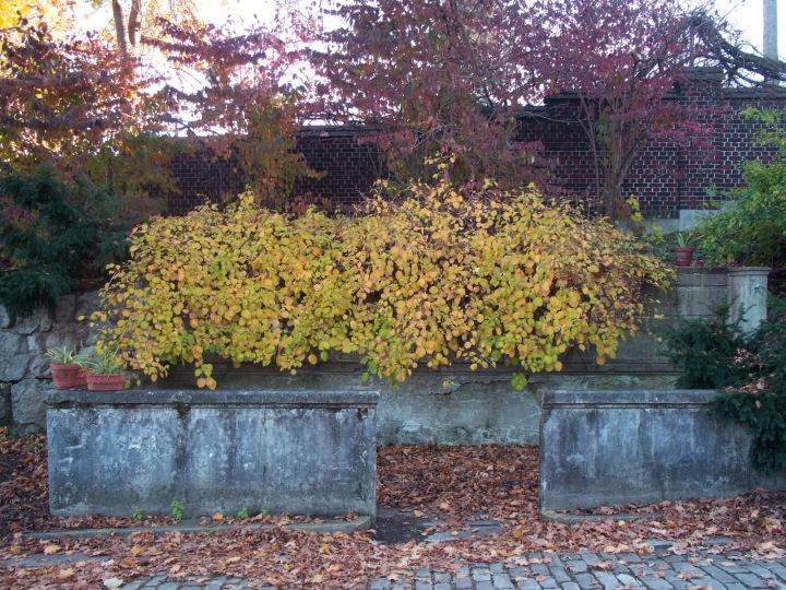 Mellon Park leaves 09