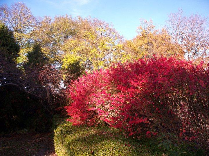 Mellon Park leaves 10