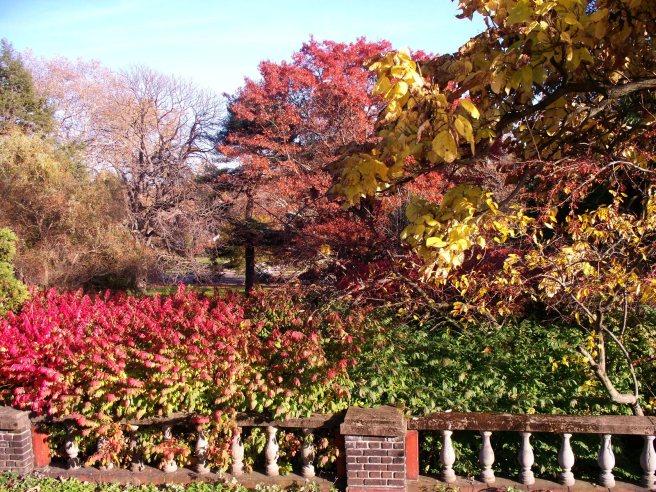 Mellon Park leaves 11