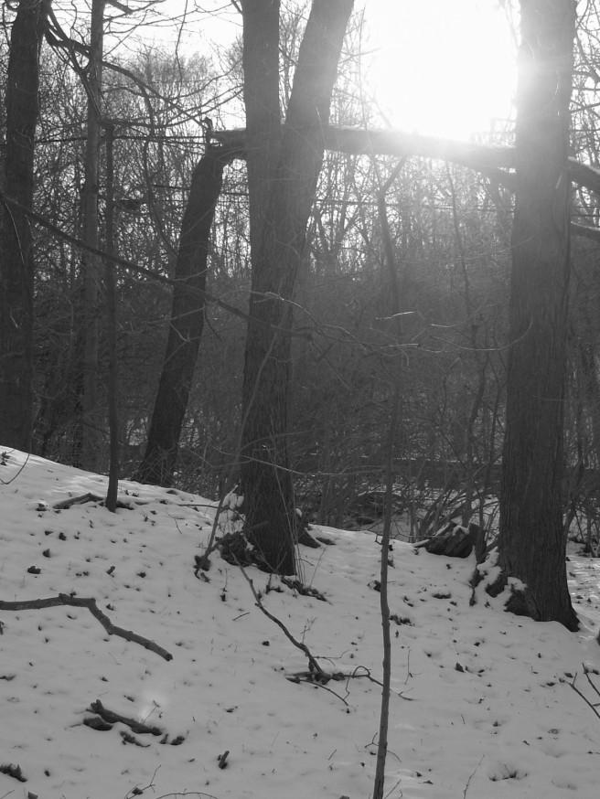 Mount Lebanon Woods, 2015-01-10, 04